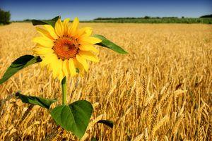 Мир сельского хозяйства